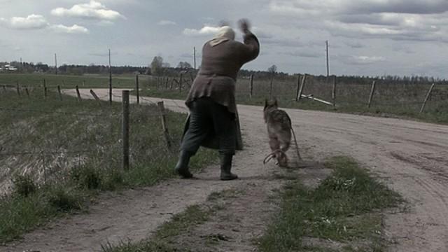 Ozolkalnu suns